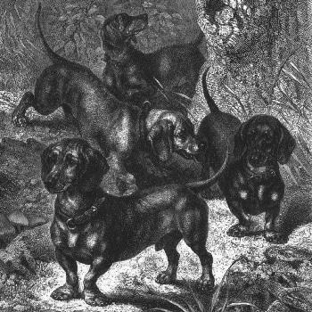 Dachshunde von 1772