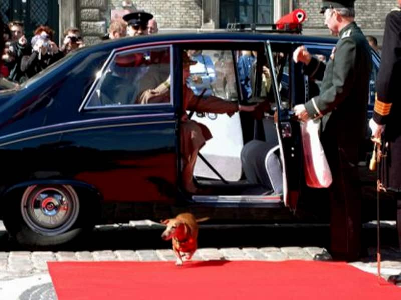 Dachshund of the danish royal family