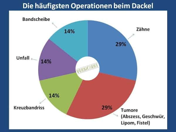 Häufigste Operationen | Dackel