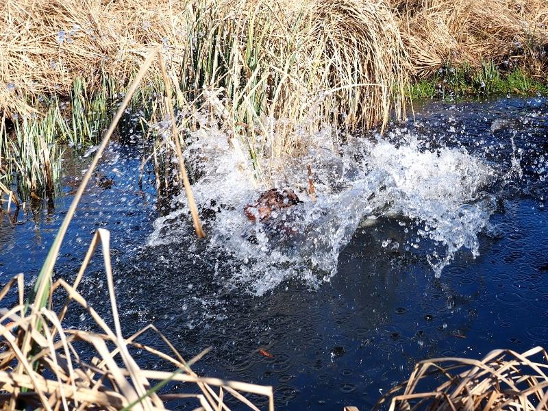 Landung im Wasser von Engels Fiorenza