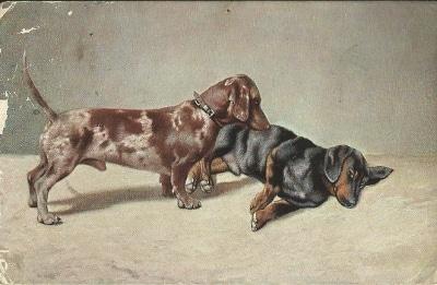 Brauntigerdackel - Postkarte von 1913