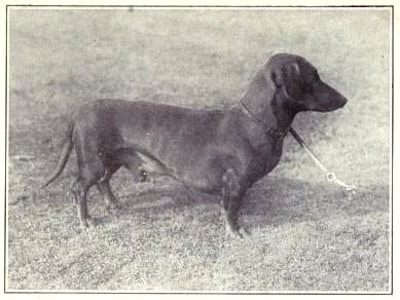Dachshund | Dogs of all nations (1915)