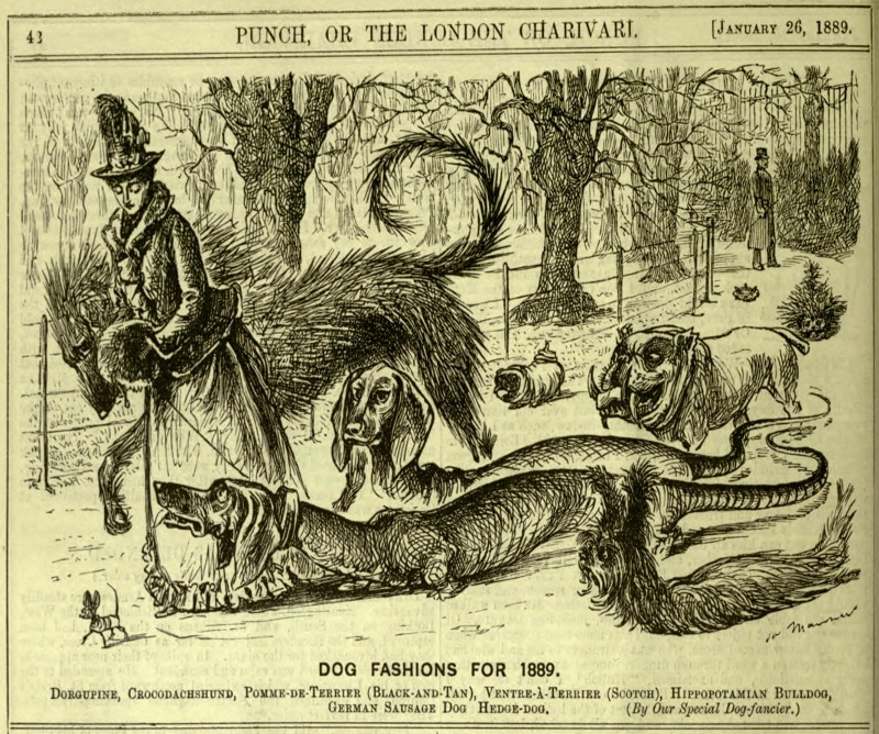 Dog Fashions For 1889 | Crocodachshund | German Sausage Dog
